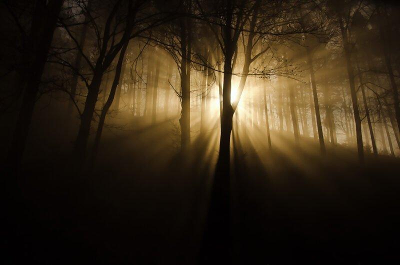 mystische naturfotos stimmung im wald