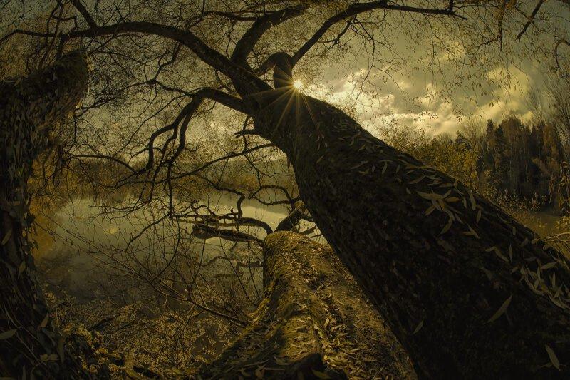 mystische naturfotos baum von unten fotografiert