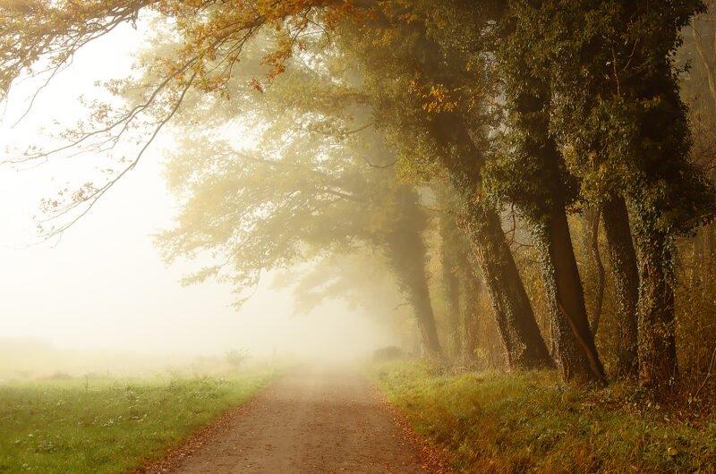 waldlichtung im nebel
