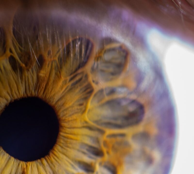 iris fotografie nahaufnahme einer iris