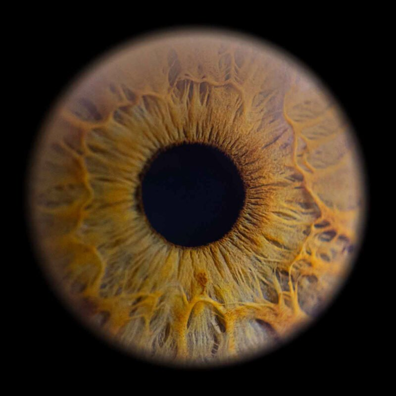 nahaufnahme einer iris im gelbton