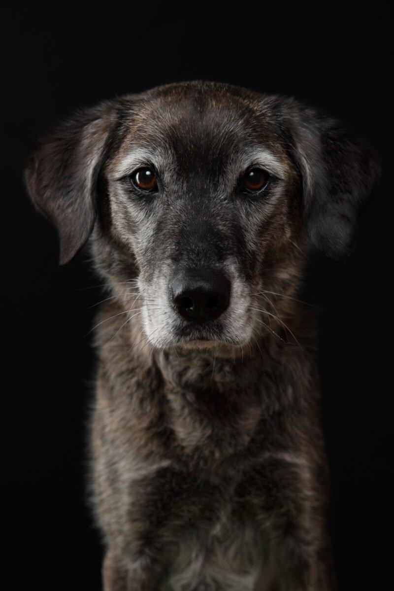 grosser hund frontal fotografiert auf schwarzem hintergrund