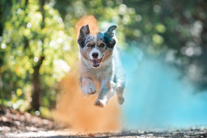 Bunte Hundefotos Blau Orange