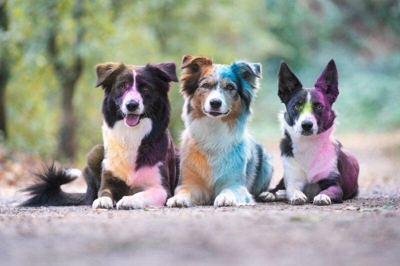 Bunte Hundefotos Hunde liegend