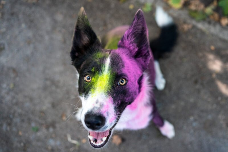Bunte Hundefotos Nahaufnahme