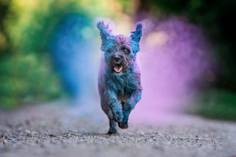 Bunte Hundefotos kleiner Hund