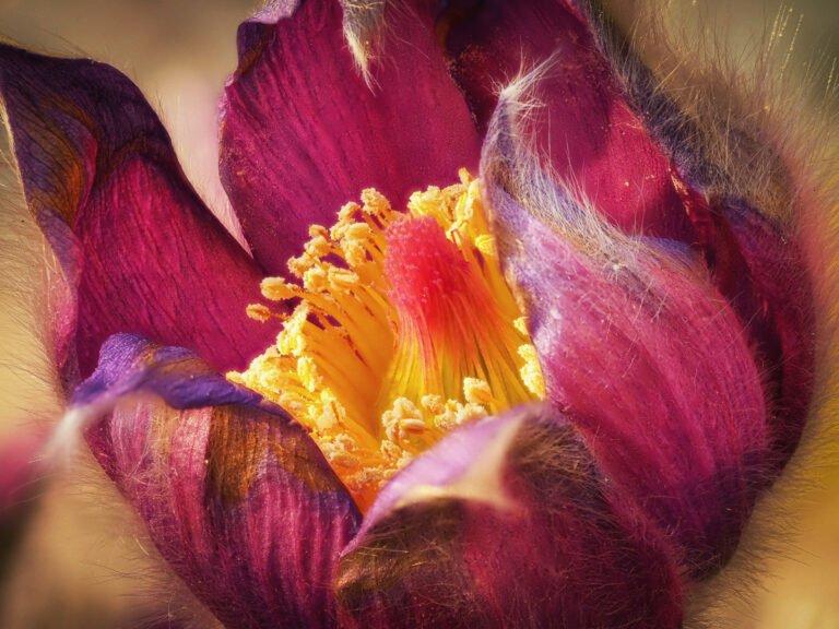 Fokus-Stacking und Fokus-Bracketing Blüte