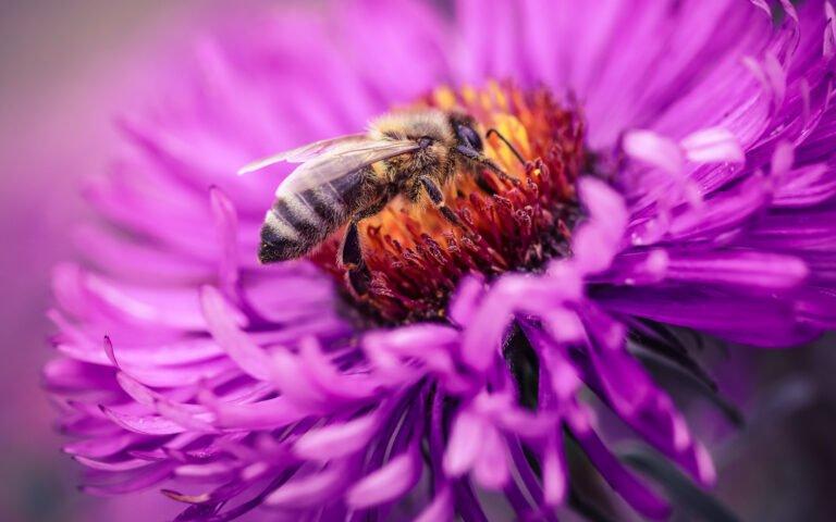 Makrofotografie Anfänger Biene
