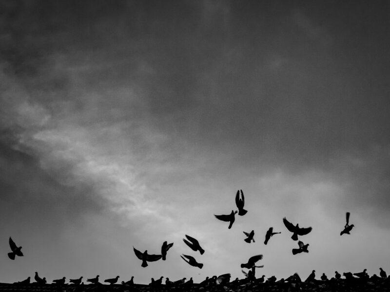 Streetfoto Vögel