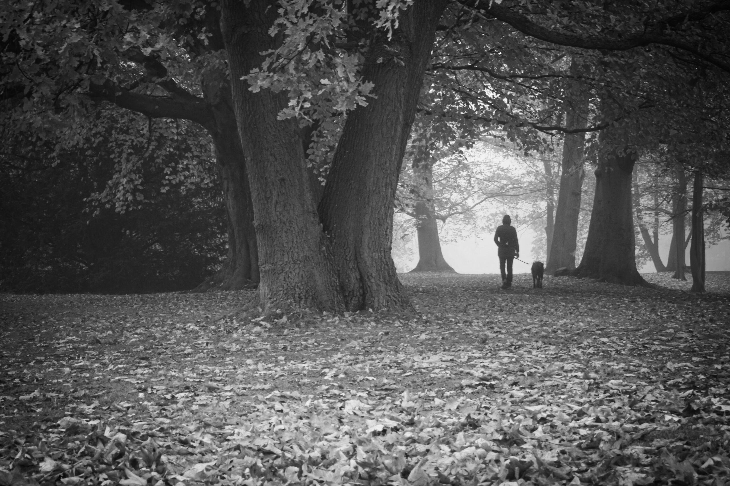 Streetfotografie Wald