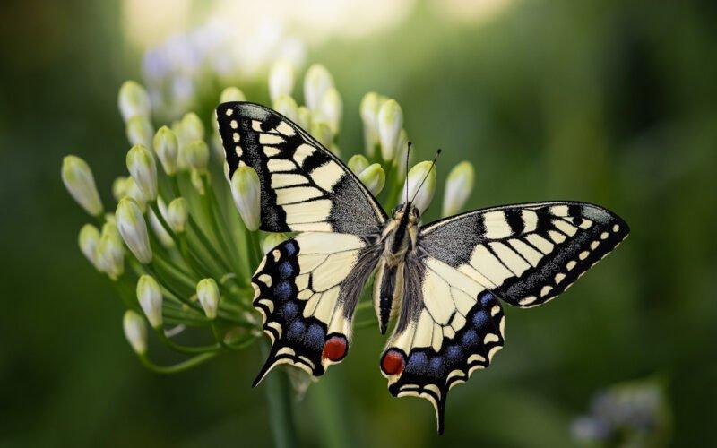 Makrofotografie Schmetterling