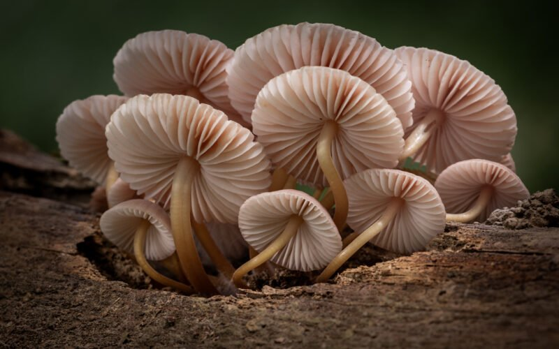 Pilze fotografieren von unten