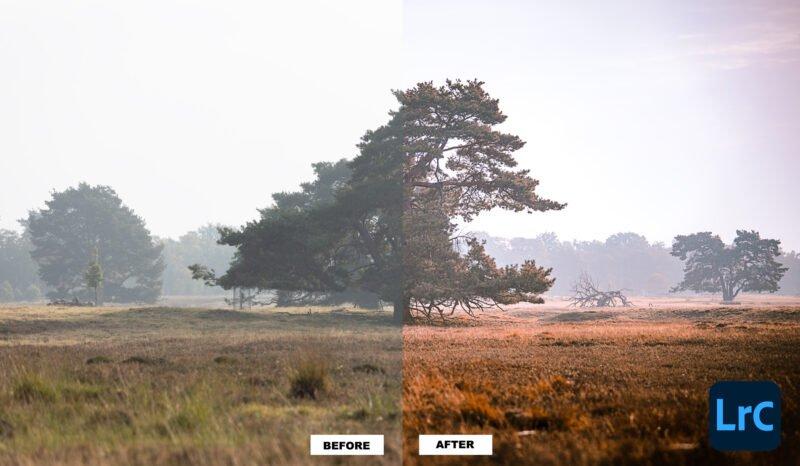 Ein Foto in Lightroom im Vorher und Nachher Vergleich