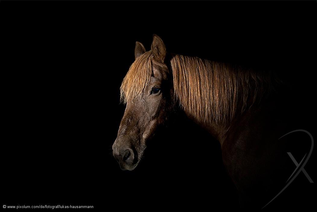 Fotograf Kriens Schweiz Lukas Hausammann | pixolum