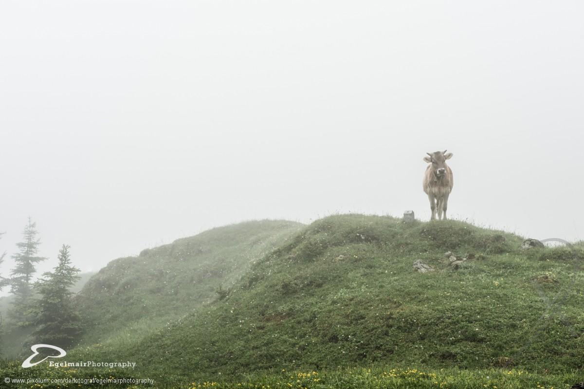 Fotograf Dachsen Schweiz Egelmairphotography | pixolum