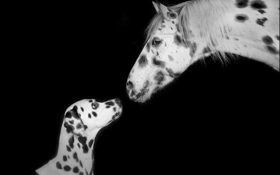 Fotograf Wil Schweiz Nicole Hollenstein | pixolum