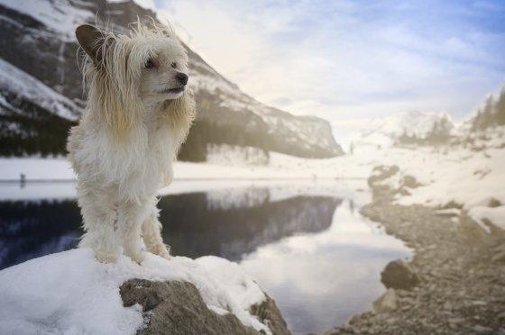 fotograf kandersteg schweiz andyfritschi ch | pixolum