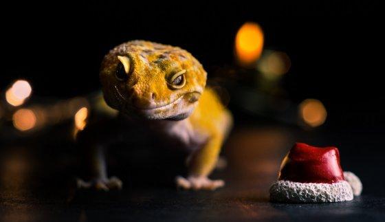 fotograf feldkirchen an der donau oesterreich ak photography | pixolum