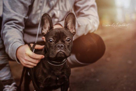 fotograf | pixolum