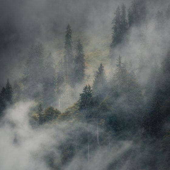 fotograf pfaeffikon schweiz yannick lyner pictures | pixolum
