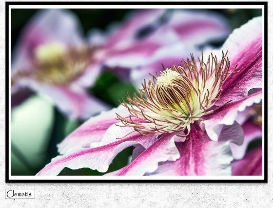 fotograf zwingen schweiz csb photography | pixolum